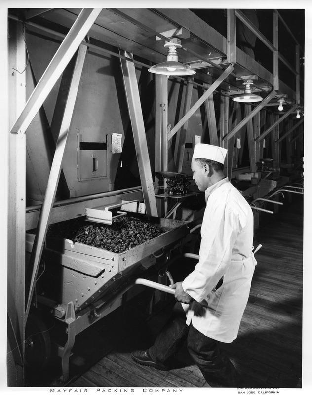 Male Worker Preparing to Remove a Large Wheelbarrow at the Mayfair Packing Co.