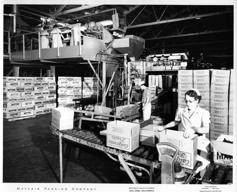 Female Worker Weighing Boxes of Fruit at the Mayfair Packing Co.