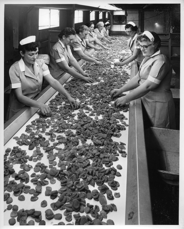 Female Workers Sorting Dried Apricots at the San Jose Mayfair Packing Co.